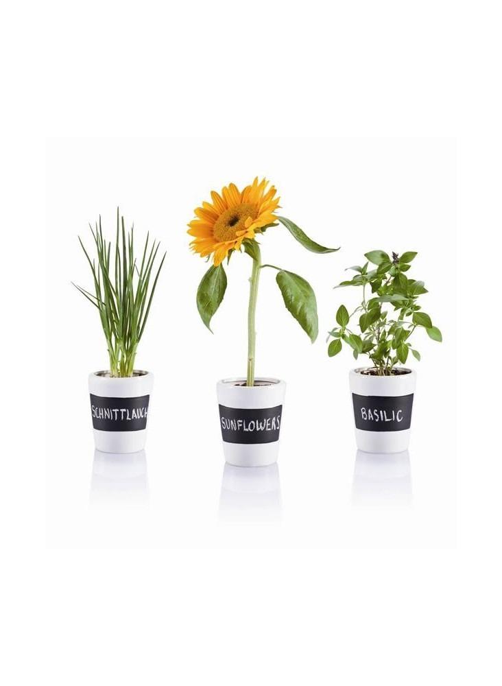 3 Pots à herbes  publicitaire