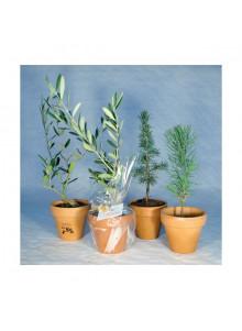 objet publicitaire - promenoch - Plant d'arbre Pot Terre personnalisable  - Plantes Personnalisés