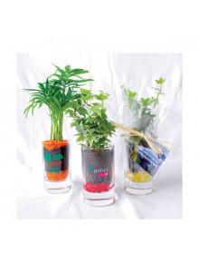 objet publicitaire - promenoch - Plante Verte Publicitaire  - Plantes Personnalisés