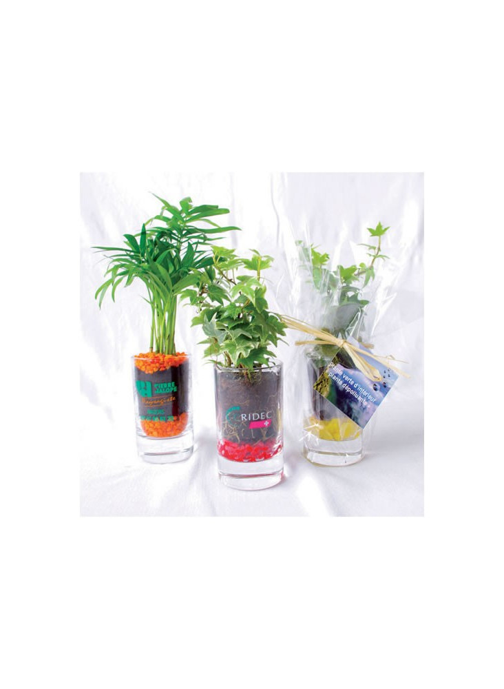 Plante Verte Publicitaire