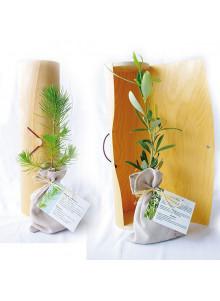objet publicitaire - promenoch - Plant d'arbre en tube  - Plantes Personnalisés