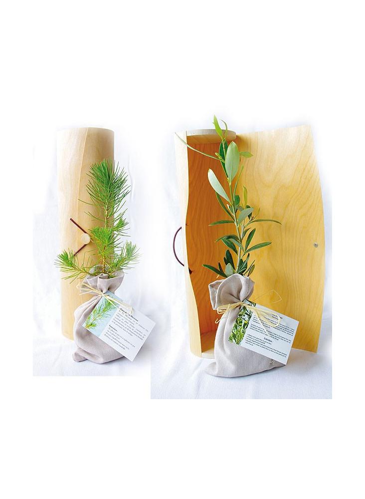 Plant d'arbre en tube  publicitaire