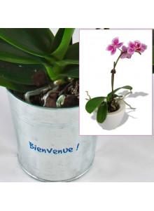 objet publicitaire - promenoch - Orchidée  - Plantes Personnalisés