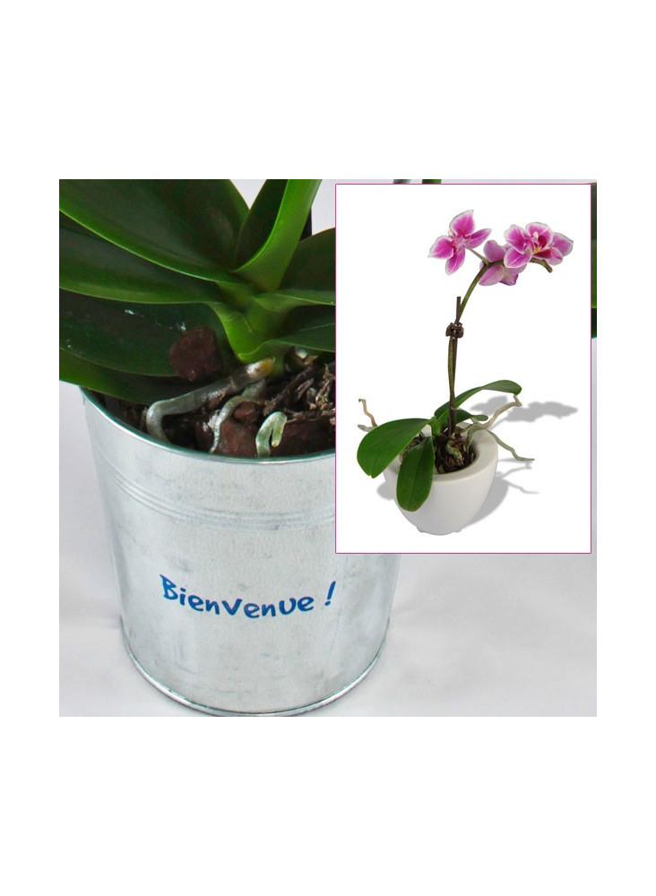 Orchidée  publicitaire