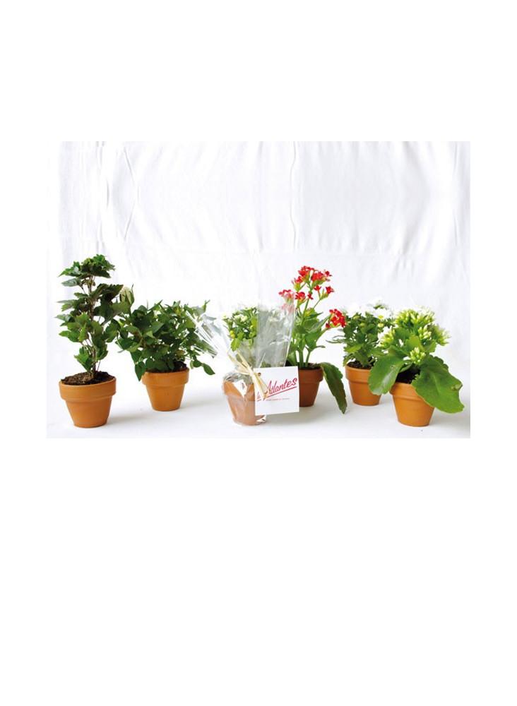 Petite plante en pot personnalisable  publicitaire