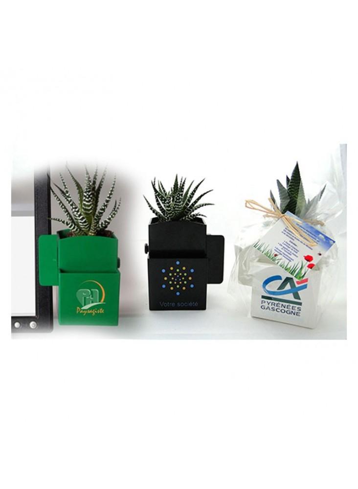 Vegetal-box avec plante dépolluante personnalisée  publicitaire