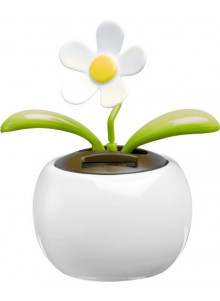objet publicitaire - promenoch - Fleur solaire  - Accueil