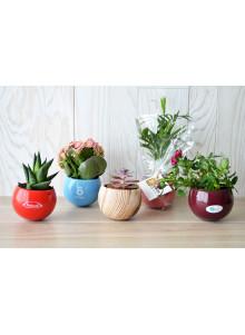 objet publicitaire - promenoch - Plante dépolluante en pot céramique aimanté personnalisable  - Accueil