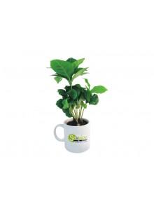 objet publicitaire - promenoch - Caféier en mug publicitaire  - Plantes Personnalisés